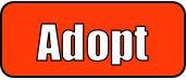 Capture Adopt
